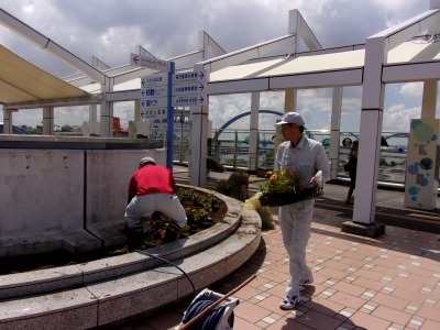 名古屋港水族館前花壇の植栽R1.8.7_d0338682_16033184.jpg
