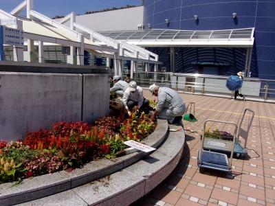名古屋港水族館前花壇の植栽R1.8.7_d0338682_16034288.jpg