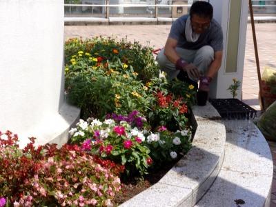 名古屋港水族館前花壇の植栽R1.8.7_d0338682_16035983.jpg