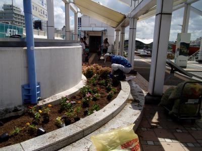 名古屋港水族館前花壇の植栽R1.8.7_d0338682_16040912.jpg