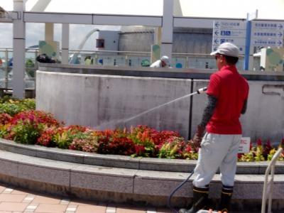 名古屋港水族館前花壇の植栽R1.8.7_d0338682_16042393.jpg