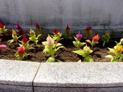名古屋港水族館前花壇の植栽R1.8.7_d0338682_16050148.jpg