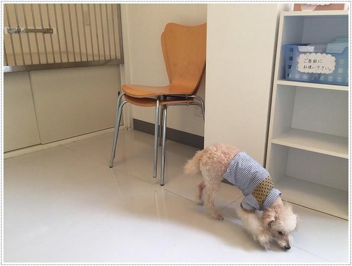 動物病院にシャンプーと、今日の大は大忙しでお疲れモード、ご飯食べたらあっと言う間にご就寝○o。.(´c_` *)zZZ….._b0175688_19484664.jpg