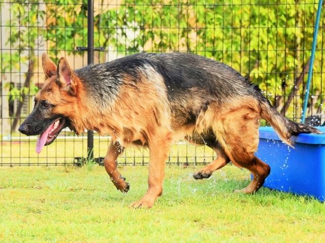 もしかして犬種特性_d0360206_01370308.jpg
