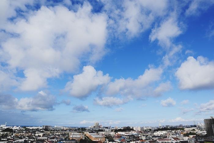 空いっぱいに舞うわた雲_b0268615_16464547.jpg