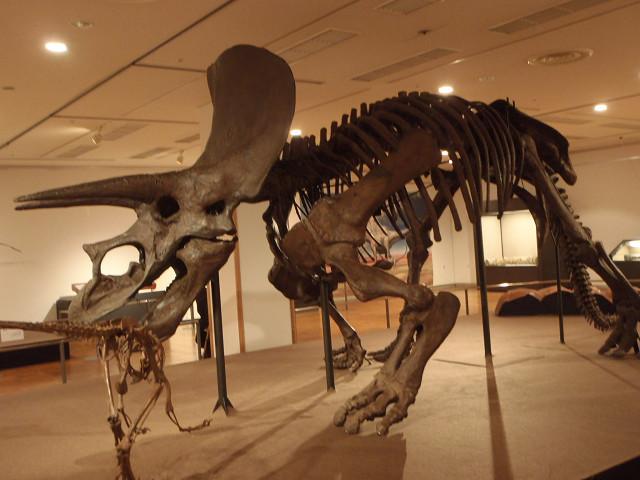 恐竜ワールド_e0371017_00021258.jpg