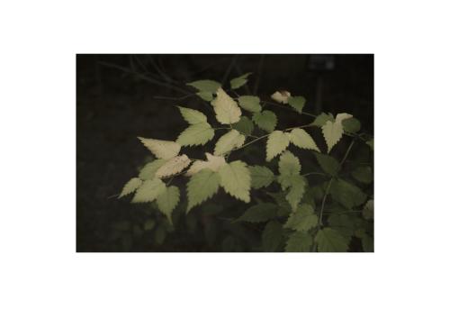 Leaves_f0288774_19353647.jpg