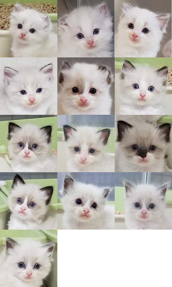 6月生まれの仔猫たち 家族募集開始いたしました♪_a0188883_17065852.jpg