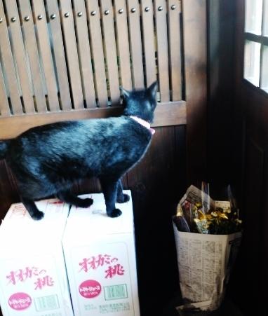 新作器のお知らせ & 倉庫番ニャン☆_e0167795_14131274.jpg