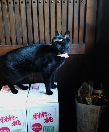 新作器のお知らせ & 倉庫番ニャン☆_e0167795_14132024.jpg