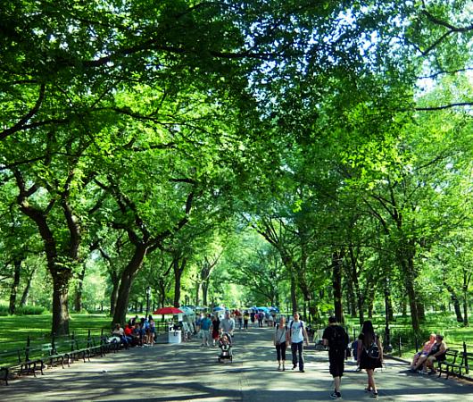 夏のニューヨークの風景、セントラルパーク最大の並木道(The Mall)_b0007805_03210580.jpg