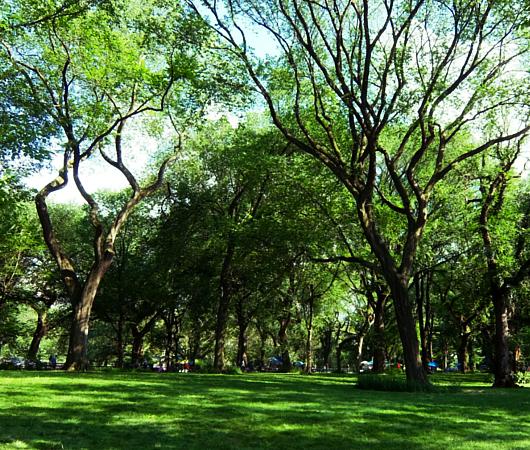 夏のニューヨークの風景、セントラルパーク最大の並木道(The Mall)_b0007805_04384968.jpg