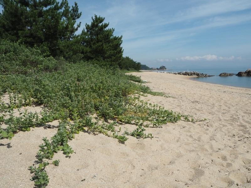 夏の海岸_e0350905_13024750.jpg