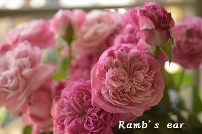 本日のお花♪_e0128909_13184402.jpg