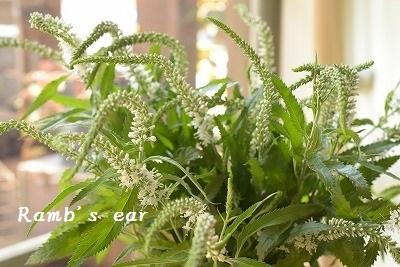 本日のお花♪_e0128909_13190342.jpg