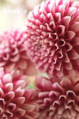 本日のお花♪_e0128909_13192208.jpg