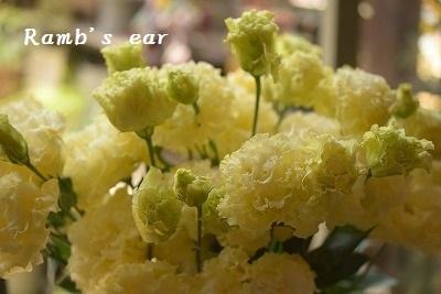 本日のお花♪_e0128909_13195568.jpg