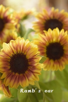 本日のお花♪_e0128909_13201207.jpg