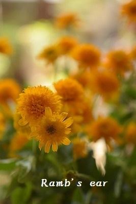 本日のお花♪_e0128909_13204084.jpg