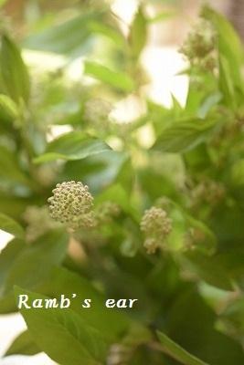 本日のお花♪_e0128909_13205738.jpg