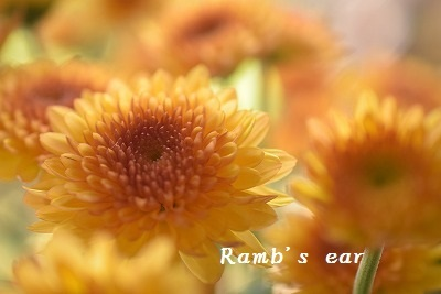 本日のお花♪_e0128909_13213000.jpg