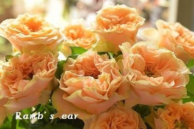 本日のお花♪_e0128909_13220894.jpg