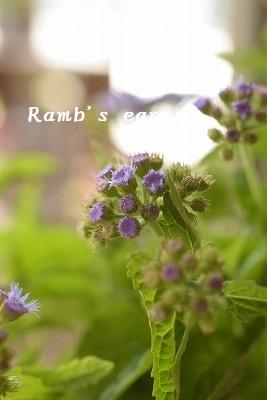 本日のお花♪_e0128909_13222333.jpg
