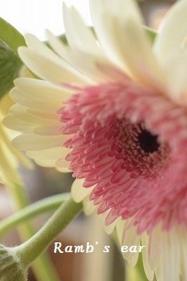 本日のお花♪_e0128909_13224194.jpg