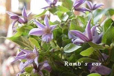 本日のお花♪_e0128909_13231643.jpg