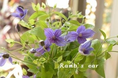 本日のお花♪_e0128909_13232625.jpg