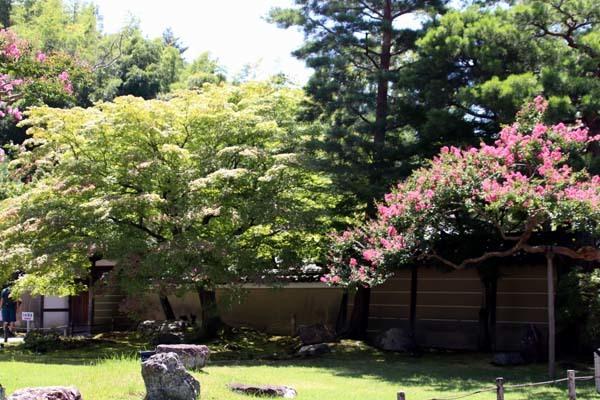高台寺 夏の盛り_e0048413_22480877.jpg