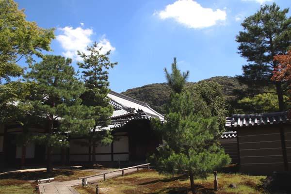高台寺 夏の盛り_e0048413_22481639.jpg