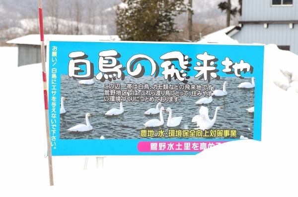 白鳥とこまち_e0005714_23451131.jpg