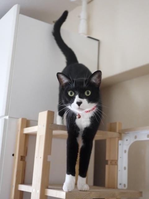 猫のお留守番 ごまちゃん編。_a0143140_23361441.jpg