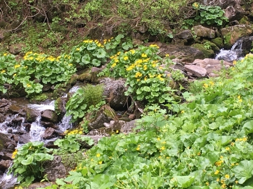 白滝村「平山」登山_e0326953_11025211.jpg