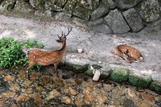 鹿もクールダウン_a0233991_20105381.jpg