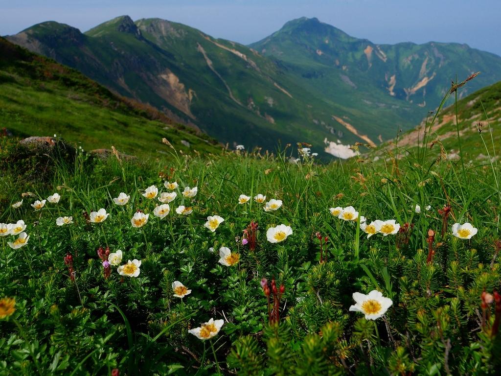 上富良野岳から十勝岳ピストン、2019.8.7ーその1ー_f0138096_13215605.jpg