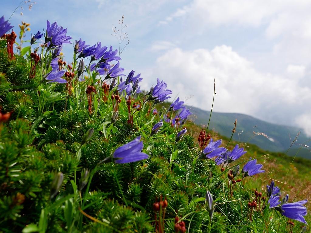 上富良野岳から十勝岳ピストン、2019.8.7ーその1ー_f0138096_13231947.jpg