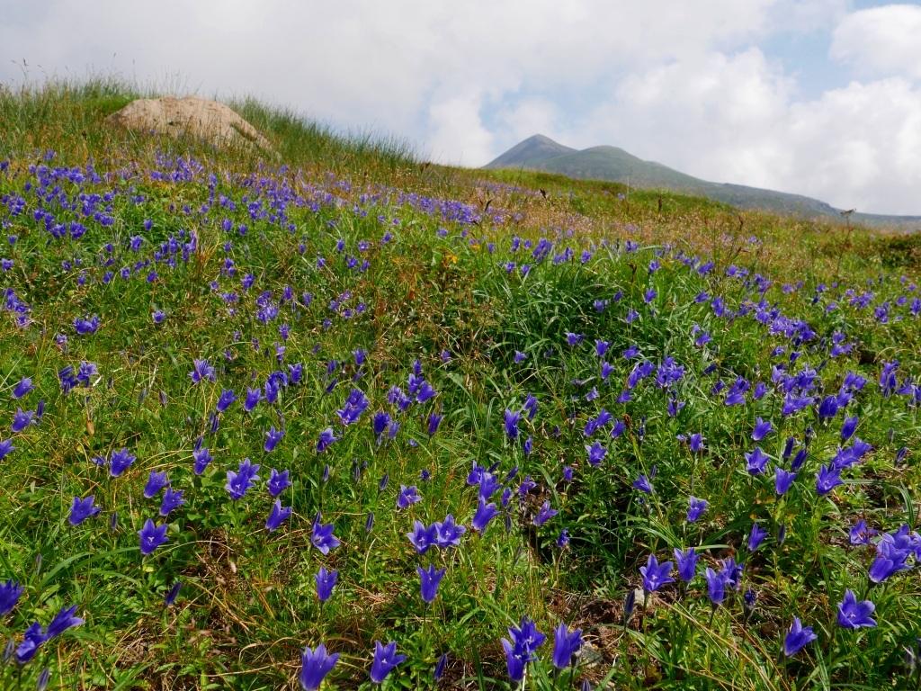 上富良野岳から十勝岳ピストン、2019.8.7ーその1ー_f0138096_13232635.jpg