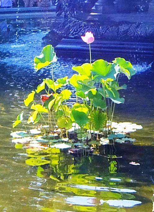 セントラルパークのベセスダの噴水、暑い夏の日ならではの風情と美しさ_b0007805_06303437.jpg