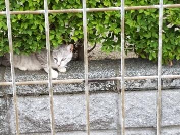 猫道  栗山由利_f0371014_09541657.jpg