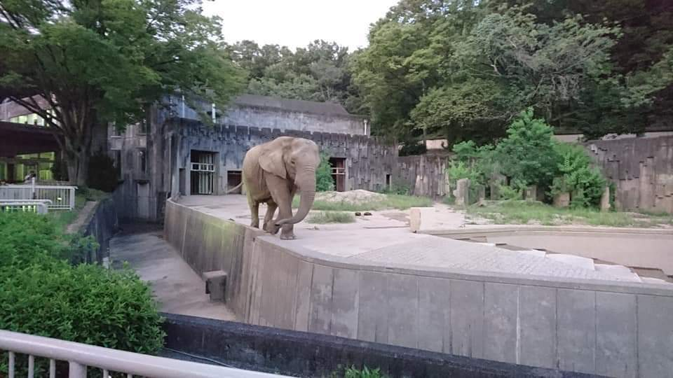 東山動植物園ナイトズー2019 初日!_f0373339_23563822.jpg