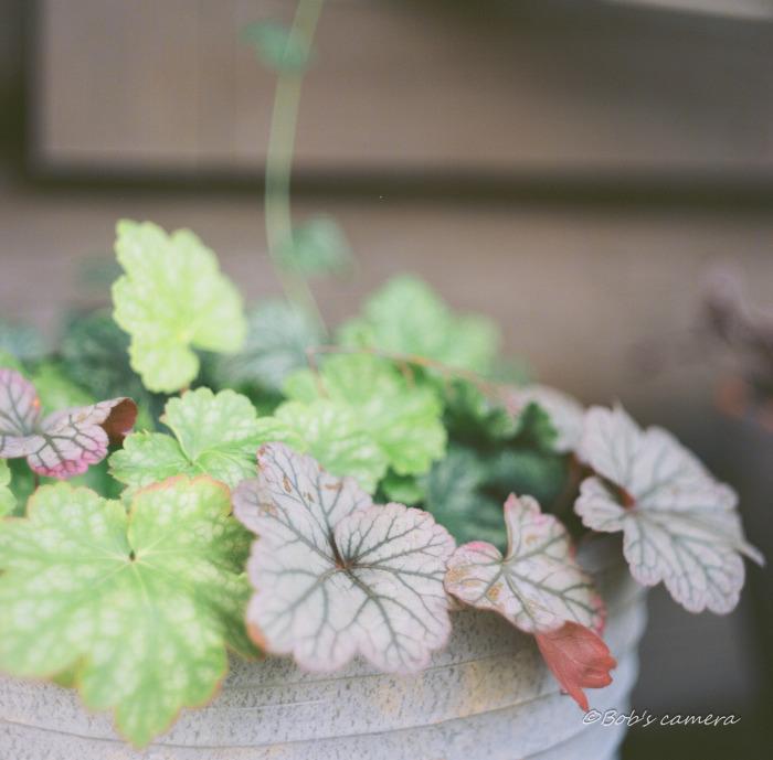 leaf_b0246079_05505514.jpg