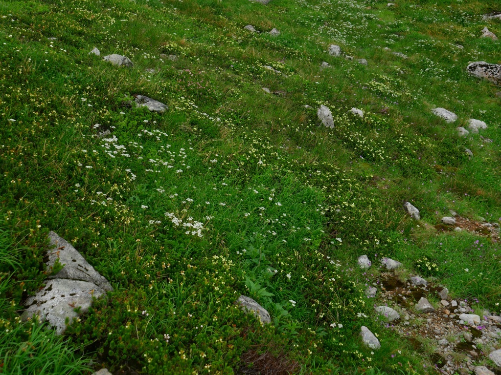 上富良野岳から十勝岳ピストン、2019.8.7ーその2ー_f0138096_10085660.jpg