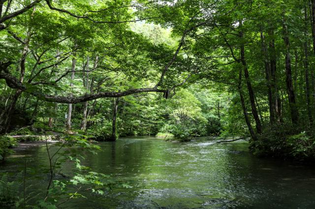 木々の棲息の地としての奥入瀬_a0158797_00184724.jpg