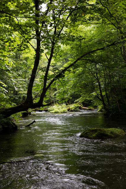 木々の棲息の地としての奥入瀬_a0158797_00191595.jpg