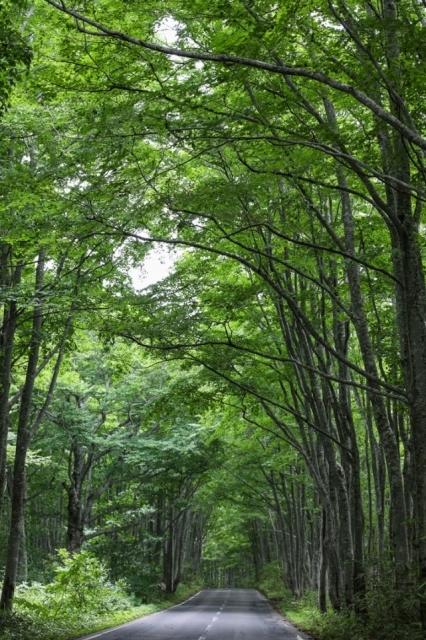 木々の棲息の地としての奥入瀬_a0158797_00234290.jpg