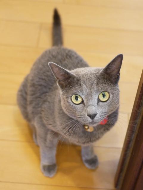 猫のお留守番 ビビちゃん編。_a0143140_23344357.jpg