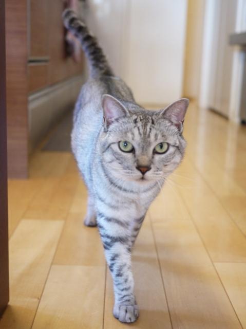 猫のお留守番 ぐらくん編。_a0143140_23401807.jpg