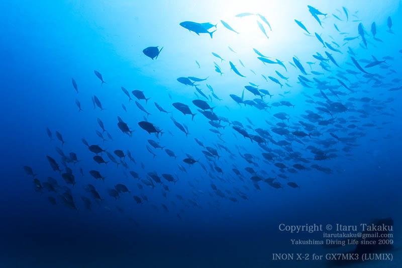 魚と人の群れ!_b0186442_18274145.jpg
